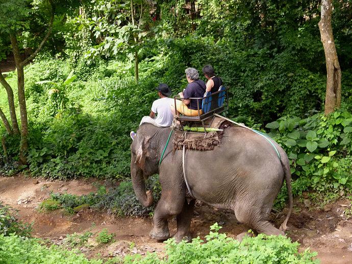 泰国雕像动物 牛