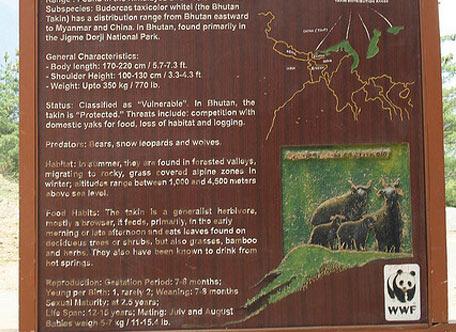廷布塔金动物园 thimphu takin zoo