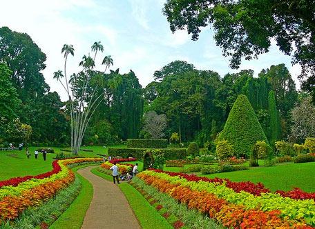 佩拉德尼亚皇家植物园